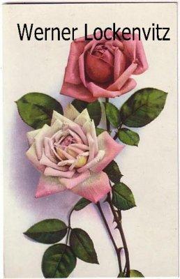 Ansichtskarte Rosen
