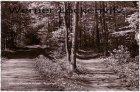 Ansichtskarte Cismar in Holstein Waldwege Bäume