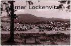 Ansichtskarte Braunlage Ortsansicht Panorama Der Adamsblick