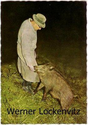 Ansichtskarte St. Andreasberg Wildütterung mit Wildschwein bei der Fütterung