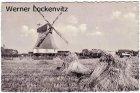 Ansichtskarte Föhr Nordseeinsel Wrixum Mühle