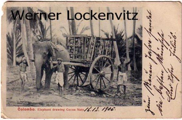 Vintage Postcard Sri Lanka Colombo Elephant drawing Cocoa Nuts