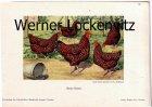 Rassehühner Bunte Sussex nach einem Aquarell von R. Hoffmann