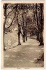 Alte Ansichtskarte Soest Wallpartie