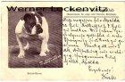 Alte Ansichtskarte München Hunde Münchener Bulldog-Klub British-Stone