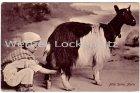 Ansichtskarte Malta Junge melkt Ziege Milchverkäufer