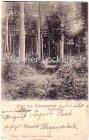 Ansichtskarte Schwarzenbek Waldparthie