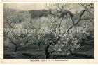 Ansichtskarte Postal Con Vista Spanien España Baleares Mallorca Almendros en flor Mandelblüten