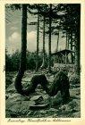 Ansichtskarte Braunlage Kamelfichte Baum Bäume tree