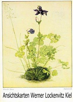Ansichtskarte Akeleistock Gemälde von Albrecht Dürer Blumen Landpost Heiderfeld Leezen