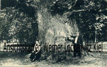 Ansichtskarte Ivenack Stärkste Eiche Deutschlands