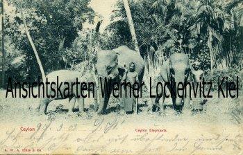 Postcard Sri Lanka Ceylon Elephants