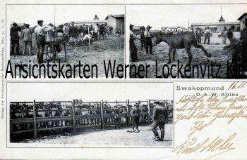 Ansichtskarte Deutsch-Suedwestafrika DSW Swakopmund Pferde