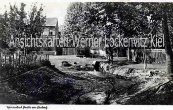 Ansichtskarte Schwanebeck Kreis Oschersleben Partie am Limbach