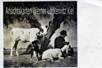 Ansichtskarte Rast unter Weiden von Prof. J. P. Junghanns Haus der Deutschen Kunst HDK Nr. K 43a