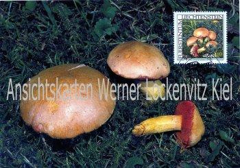 Liechtenstein Bitterlicher Zwergröhrling Pilze Maximumkarte