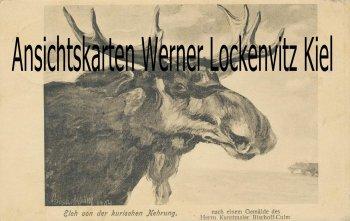 Ansichtskarte Litauen Ostpreußen Elch von der Kurischen Nehrung Gemälde Kunstmaler Bischoff-Culm