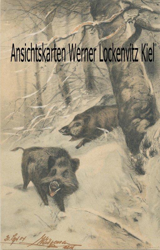 Ansichtskarte Wildschweine im Winter