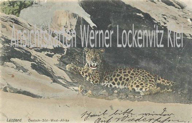Ansichtskarte Deutsch-Südwestafrika DSW Leopard Wilhelmstal