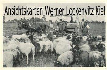 Ansichtskarte Hanstedt Pony-Ausfahrten Egon Dittmer