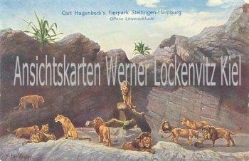 Ansichtskarte Hamburg-Stellingen Offene Löwenschlucht Carl Hagenbecks Tierpark
