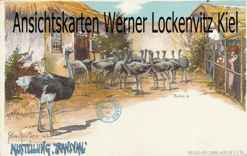 Postcard Germany Berlin exhibition Transvaal ostrich farm Litho